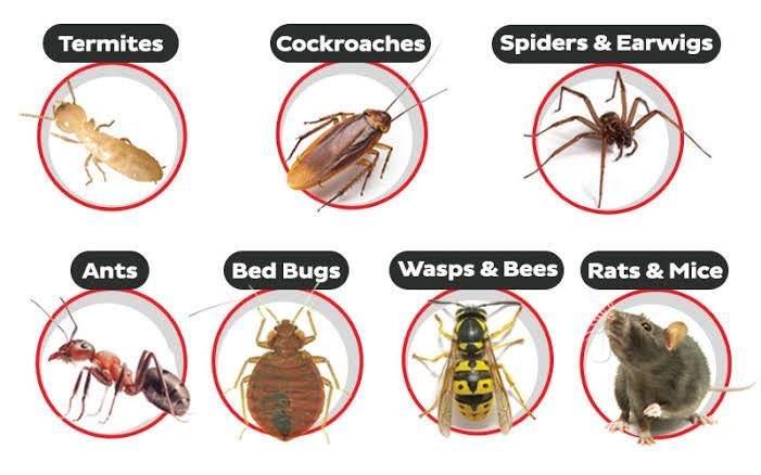 Pest Control Services in Nairobi Kenya