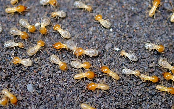 Termites Control Services